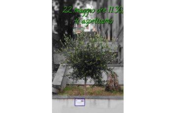 22 maggio albero 2